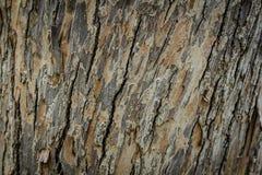 Corteccia di vecchio modello di legno del fondo di struttura dell'albero Fotografia Stock Libera da Diritti