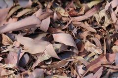 Corteccia e foglie in autunno Fotografia Stock