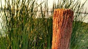 Corteccia e lago Fotografia Stock