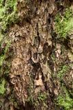 Corteccia e muschio sull'albero Immagine Stock