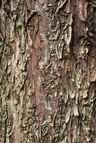 Corteccia grigia Immagine Stock