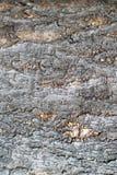 Corteccia grigia Struttura, fondo immagine stock libera da diritti