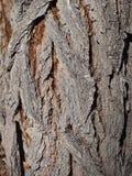 Corteccia invecchiata 2 Fotografia Stock Libera da Diritti
