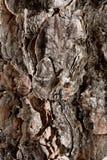 Corteccia irregolare Immagini Stock
