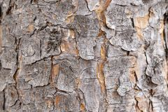 Corteccia legnosa immagine stock libera da diritti