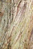 Corteccia strutturata del cedro rosso occidentale di thuja plicata fotografia stock libera da diritti