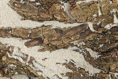 Corteccia sulla sabbia Immagini Stock Libere da Diritti