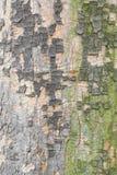 Corteccia variopinta dell'albero piano fotografia stock