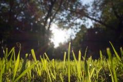 Cortes de la hierba Fotografía de archivo libre de regalías