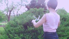 Cortes de la muchacha un arbusto con las tijeras almacen de video