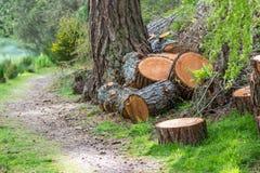 Cortes de madeira dos logs imagem de stock royalty free
