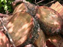 Cortes del detalle 2 del tronco de árbol Imagen de archivo libre de regalías