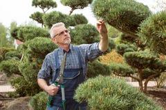 Cortes del jardinero que un arbusto decorativo esquila fotografía de archivo libre de regalías