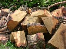 Cortes del tronco de árbol Fotos de archivo