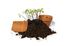 Cortes novos da semente com potenciômetros Fotografia de Stock Royalty Free