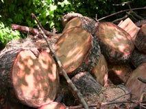 Cortes redondos del tronco de árbol Fotos de archivo libres de regalías