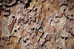 Cortex brown texture Stock Photos