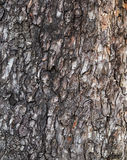 Cortex pine tree background Stock Photography