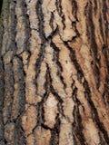 Corteza Imagen de archivo