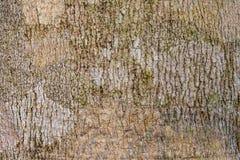 Corteza Imagen de archivo libre de regalías