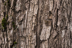 Corteza con el musgo Imagen de archivo