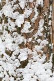Corteza con nieve Foto de archivo libre de regalías