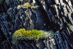 Corteza congelada con el musgo Imagenes de archivo