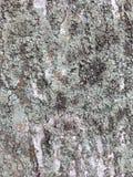 Corteza cubierta musgo en un árbol Imagen de archivo