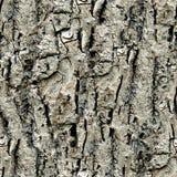 Corteza de árbol Fotografía de archivo libre de regalías