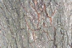 Corteza de árbol. Foto de archivo libre de regalías
