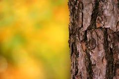 Corteza de árbol foto de archivo libre de regalías
