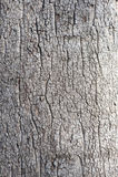 Corteza de árbol Imagen de archivo libre de regalías