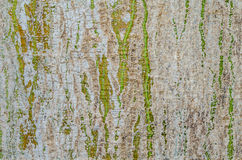 Corteza de árbol Imagenes de archivo