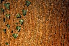 Corteza de árbol Fotografía de archivo