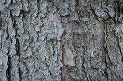 Corteza de árbol Foto de archivo