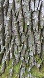 Corteza de árbol Fotos de archivo