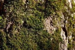 Corteza de árbol abstracta con el musgo Fotos de archivo libres de regalías