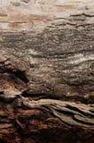 Corteza de árbol abstracta de Brown Imágenes de archivo libres de regalías
