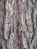 Corteza de árbol close-up-5022226 Fotografía de archivo