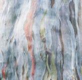 Corteza de árbol colorida foto de archivo libre de regalías