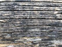 Corteza de árbol como la textura del fondo Fotografía de archivo