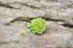 Corteza de árbol con el musgo fotografía de archivo