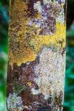 Corteza de árbol con el musgo colorido Fotos de archivo