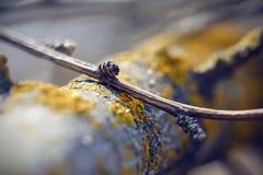 Corteza de árbol cubierta con el liquen amarillo y una rama fina imagen de archivo libre de regalías