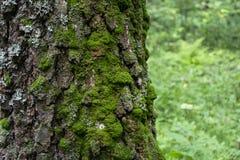 Corteza de árbol cubierta con el primer del musgo foto de archivo libre de regalías