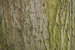 Corteza de árbol cubierta de musgo Fotos de archivo