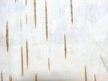 Corteza de árbol de abedul Foto de archivo libre de regalías