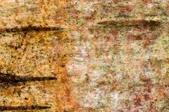 Corteza de árbol de abedul de plata Imagenes de archivo