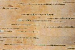Corteza de árbol de Aspen Imagen de archivo libre de regalías