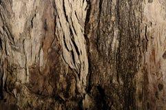 Corteza de árbol de Brown Imagen de archivo libre de regalías